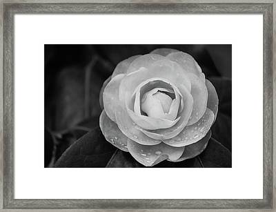 Camellia Black And White Framed Print