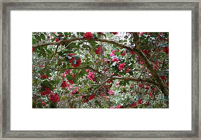 Camellia Branches Large Canvas Framed Print by Carol Groenen