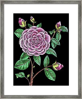 Camellia Flower Watercolour  Framed Print