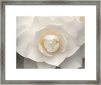 Camellia Perfection Framed Print
