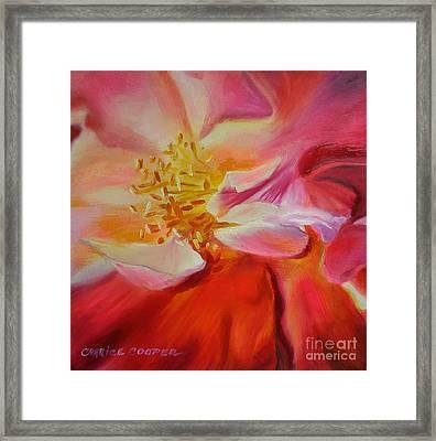 Camellia's Blush Framed Print