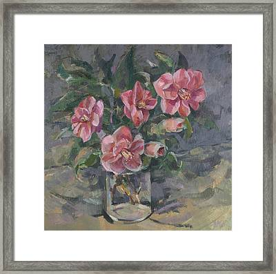 Camellias Framed Print by Sue Wales