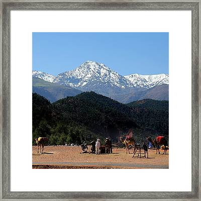 Framed Print featuring the photograph Camels 1 by Andrew Fare