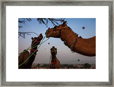 Camels And Balloons Framed Print
