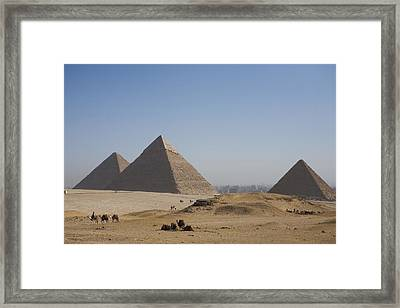 Camels At The Great Pyramids At Giza Framed Print by Taylor S. Kennedy