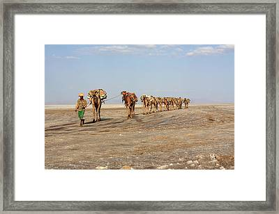A Man Leads His Camels To Market Framed Print