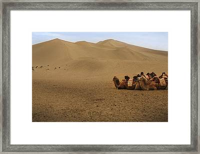Camels Of The Silk Route Framed Print