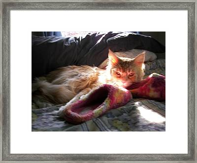 Framed Print featuring the photograph Cameo And Sunbeams by Judy Via-Wolff