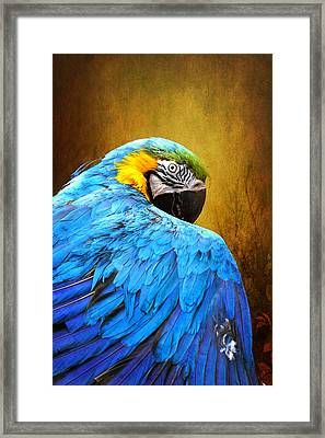 Framed Print featuring the photograph Camera Shy by John Rivera