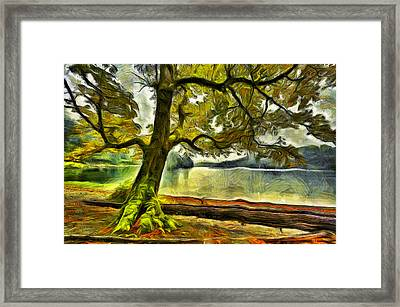 Cameron Lake Tree In Autumn Framed Print by Mark Kiver