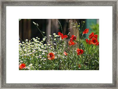 Camille And Poppies Framed Print by Rainer Kersten
