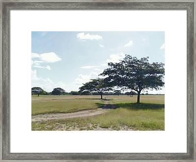 Camino En La Pradera Framed Print