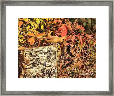 Camo Bird Framed Print