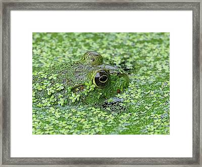 Camo Frog Framed Print by Ronda Ryan