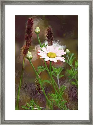 Camomile And Grass Framed Print by Joe Halinar