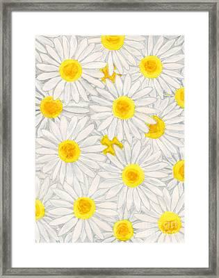 Camomiles Framed Print