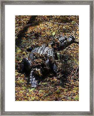 Camouflage Framed Print by Carol Groenen