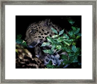 Camouflage Framed Print by Martin Newman