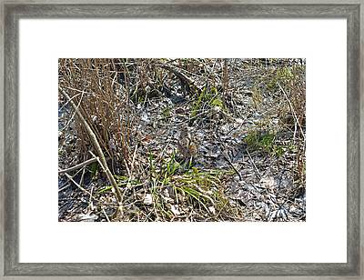 Camouflaged And The Tail Spread Framed Print by Asbed Iskedjian