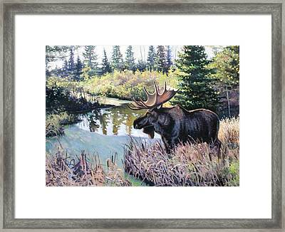 Camp 20 Creek Moose Framed Print by Larry Seiler