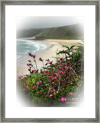 Campions Over Whitesands Bay Cornwall Framed Print by Linsey Williams