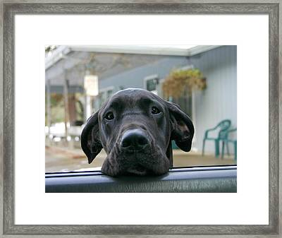 Can I Come In Framed Print by Marie Neder
