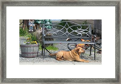Can I Go Home With You Framed Print