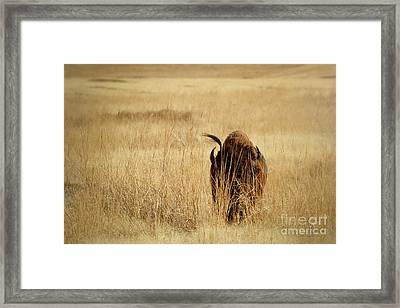Can They See Me Now Framed Print