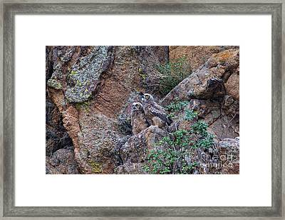 Can We Fly Now? Framed Print by Scott Nelson