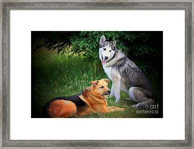 Can We Play Now Framed Print by Marjorie Imbeau