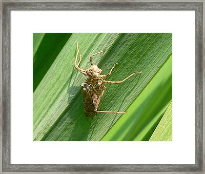 Can You Belive This Framed Print by Tom LoPresti