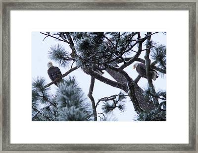 Can You Find The Third Eagle Framed Print