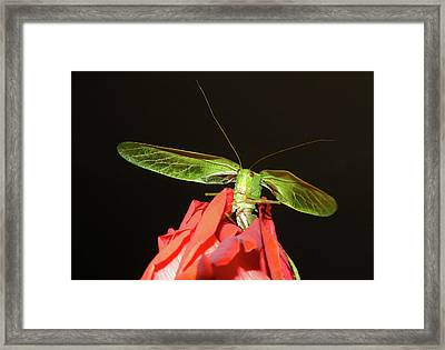 Can You Hear Me Now By Karen Wiles Framed Print