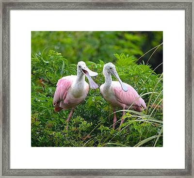 Can You Hear Me Now Framed Print