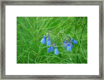 Can You Hear The Blue Bells Framed Print by Bj Hodges