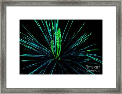 Can You Hear Their Whispers Framed Print by Michael Eingle