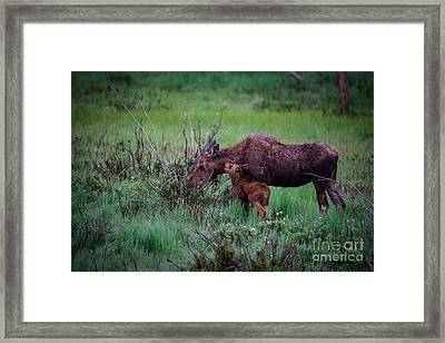 Can You Keep A Secret Framed Print by Sandy Molinaro