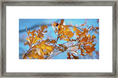 Can You Paint With All The Colors Of The Wind? Framed Print