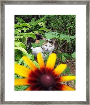 Can You See Me Framed Print by Linda Henriksen