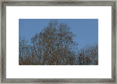 Can You See Me Now Framed Print by Teresa Mucha