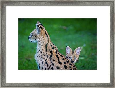 Can You See Me? Framed Print by Rainer Kersten