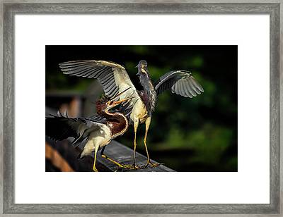 Can You Spare A Dime? Framed Print