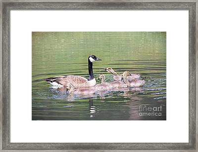 Canada Geese Bathtime Framed Print by Sharon McConnell