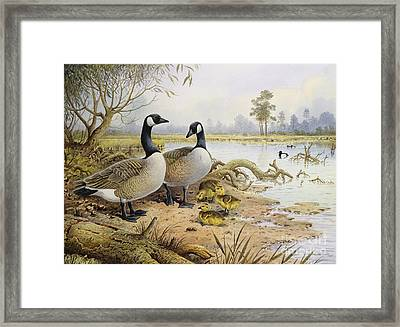 Canada Geese Framed Print by Carl Donner