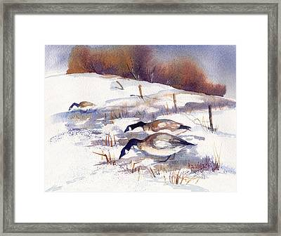 Canada Geese In Stubble Field II Framed Print by Peggy Wilson