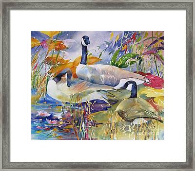 Canada Geese Framed Print