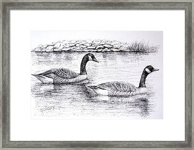 Canada Geese Framed Print by Terence John Cleary