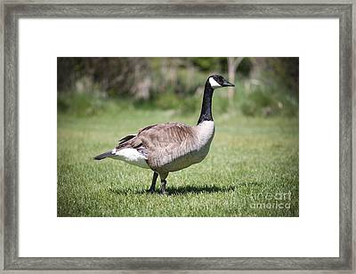 Canada Good Close Up Framed Print