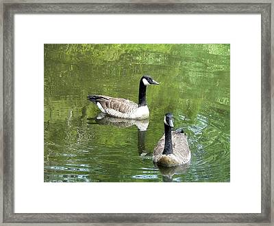 Canada Goose Duo Framed Print by Al Powell Photography USA
