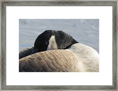 Canada Goose Head Framed Print by Mary Mikawoz
